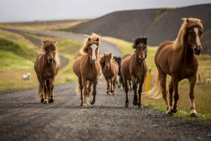 Bungalow at a Horse Farm