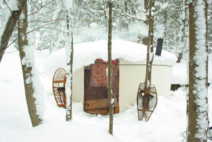 Charming Yurts in the forest. - Georgian Bluffs - Rundzelt