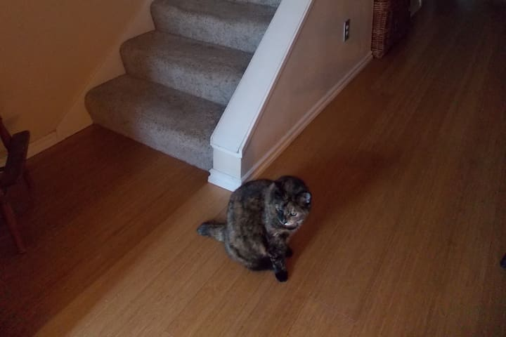 Say hi to Patty our cat on your way upstairs!