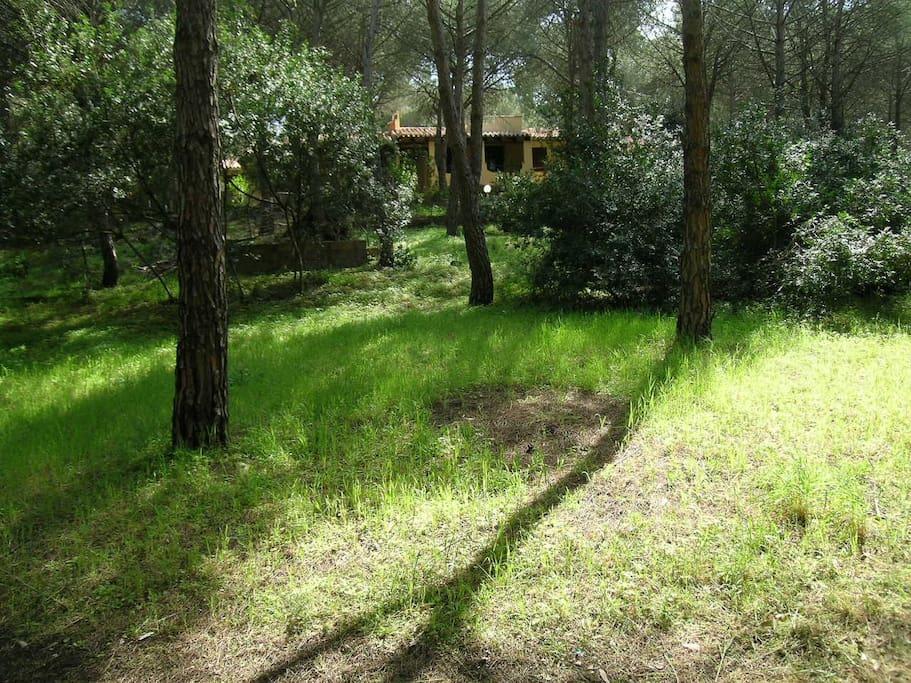 pineta boschiva e giardino privati 900 mq recintati