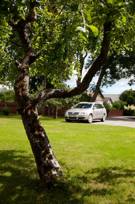 Apple tree in the garden and parking spaces