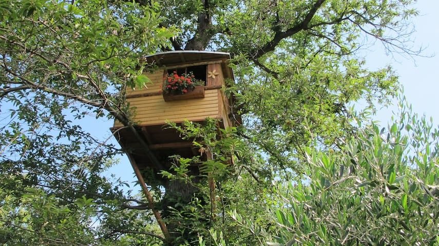 Treehouse on the chestnuttree - Capo di Ponte - Boomhut