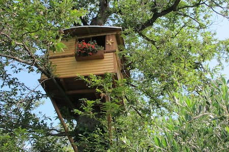 Treehouse on the chestnuttree - Capo di Ponte - 树屋