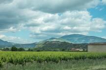 Wineyard near Malaucène