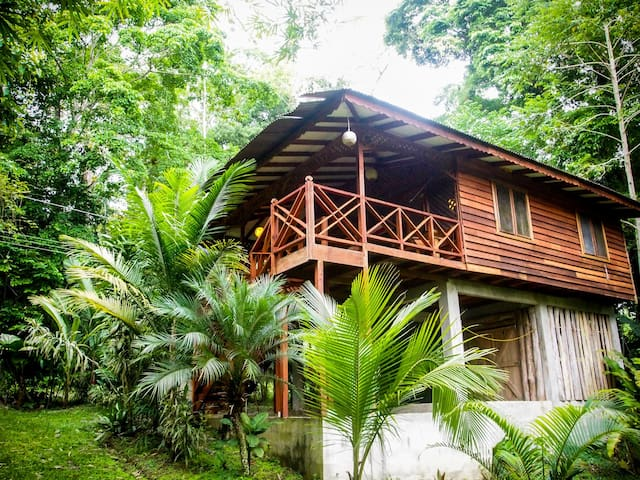 Custom Jungle House by the Ocean!