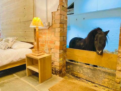 Sleepover with Miniature Horse Basil