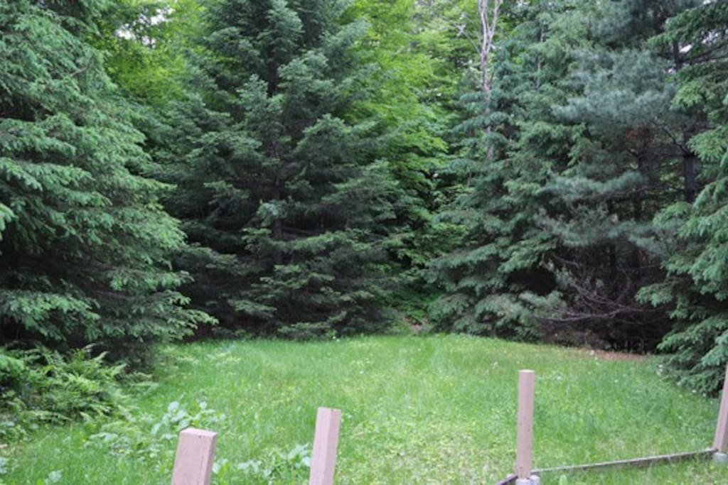 Part of private backyard