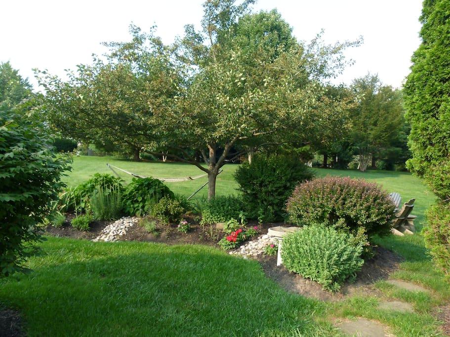 Large landscaped backyard