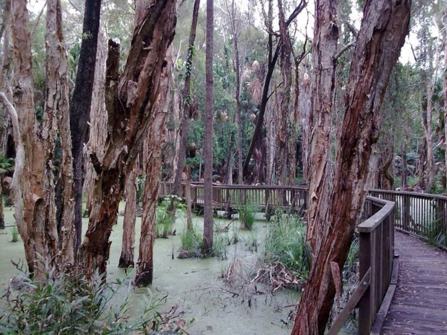 The boardwalk through the rainforest is stunning. In the wet season the forest becomes a lagoon
