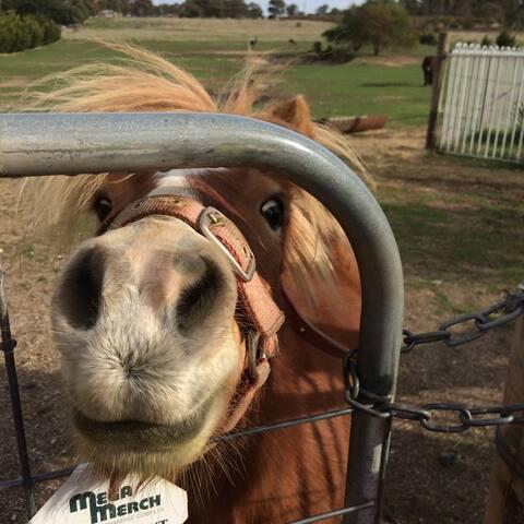 Clunes Farmstay Cabin - Farm Animals, A/C, Linen