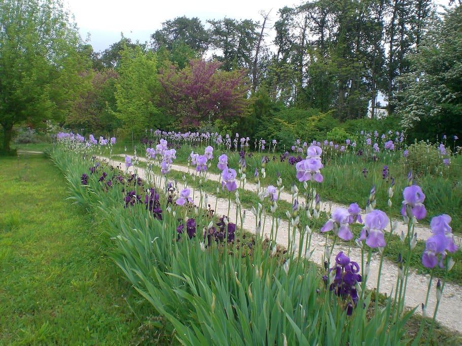 L'allée des iris
