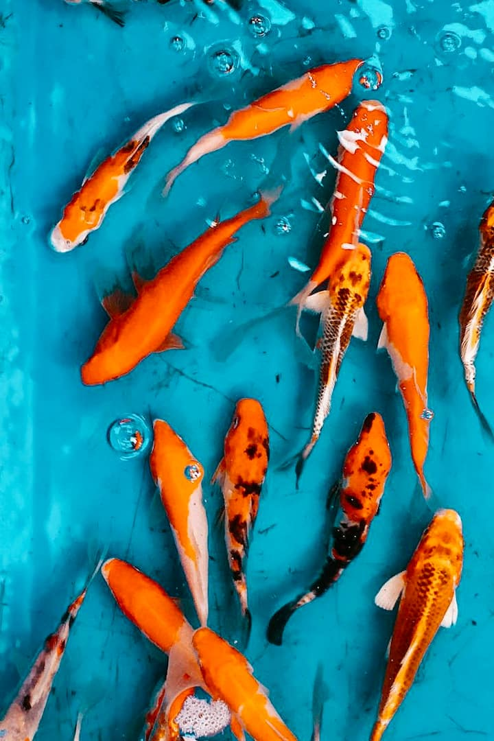 Fishes at a local market