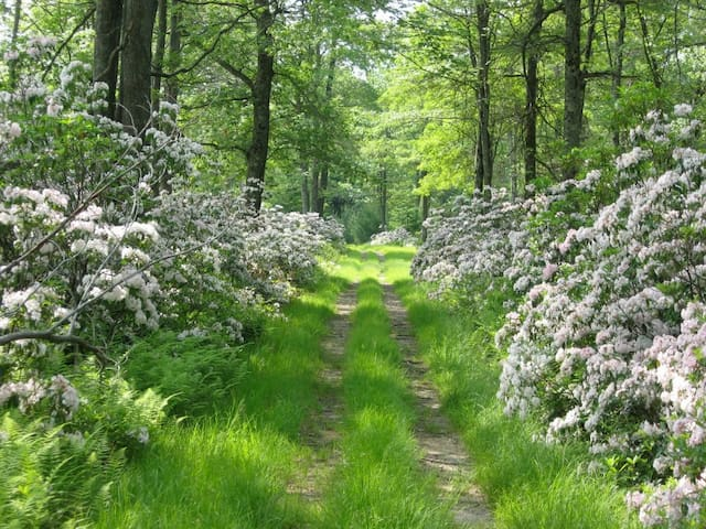 Trails through the mountain laurel in the spring.