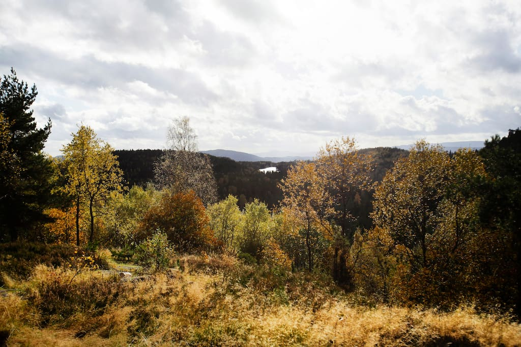 The view, autumn.