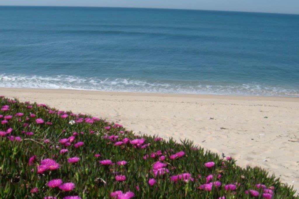 Visão da Praia a 500 metros da Casa