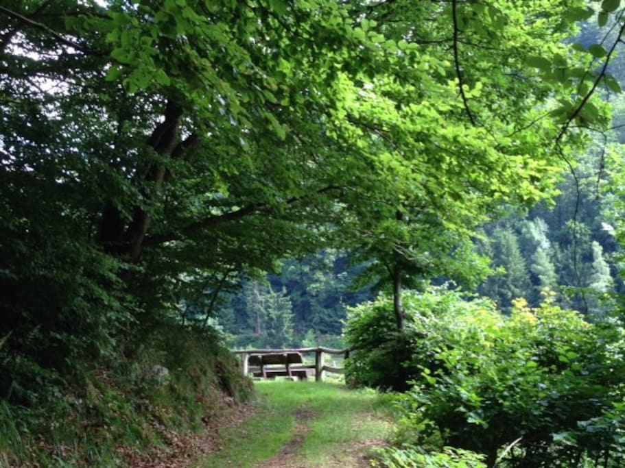 The idyllic forest path on the hillside behind the house