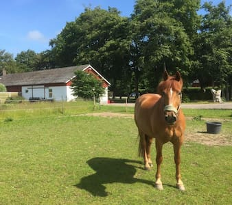 Bo på landet norr om Helsingborg - Allerum