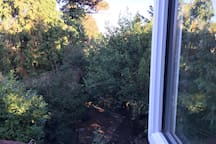 View from bedroom over back garden