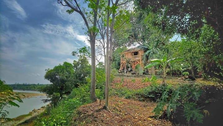 Black monkey  Treehouse lodge