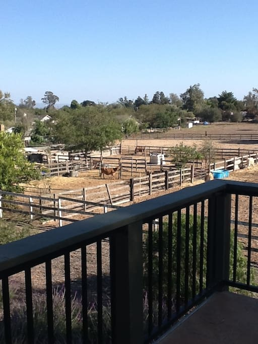 View from upstairs deck-cows, chickens and horses are our neighbors
