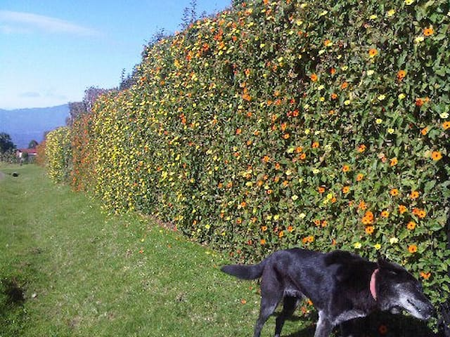 External view of property: a wall of flowers.