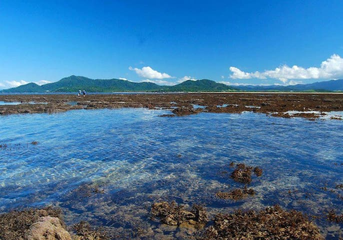 King Reef is part of the Great Barrier Reef and is heritage listed.   It is also only 800m from the beach.   During the winter months on tides lower 0.4m we can actually walk out to explore the reef.   This is an experience not to be missed!