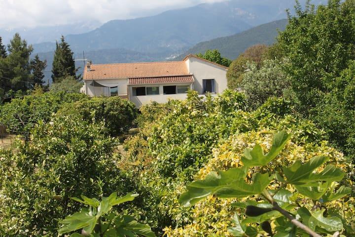Villa avec verger à 10kms de la mer - Ghisonaccia - Hus