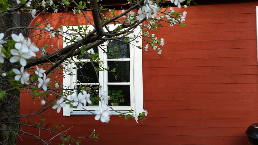 Cosy house on Österlen