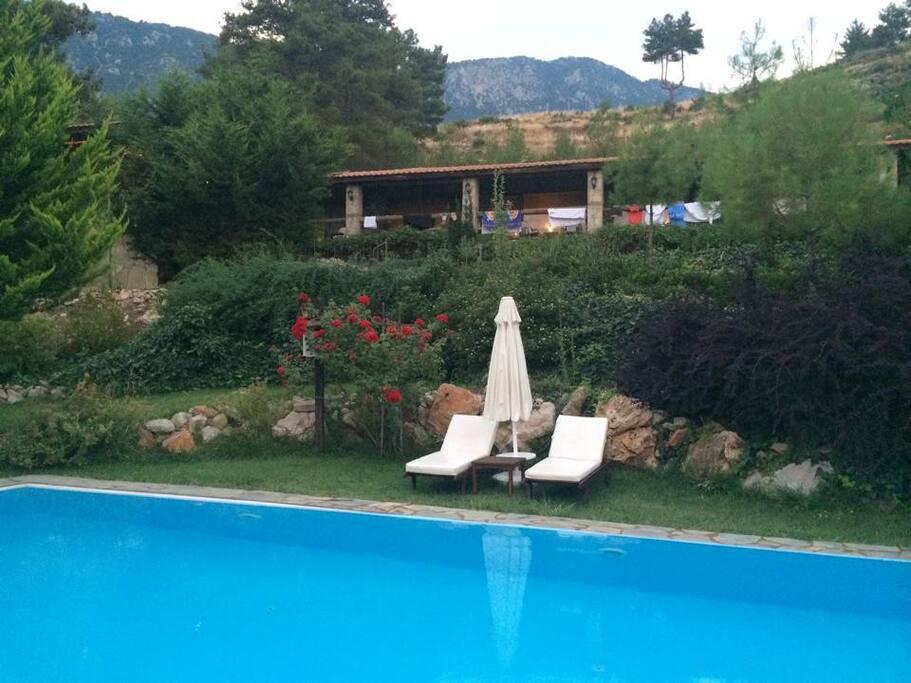 Havuz, bahce (pool, garden