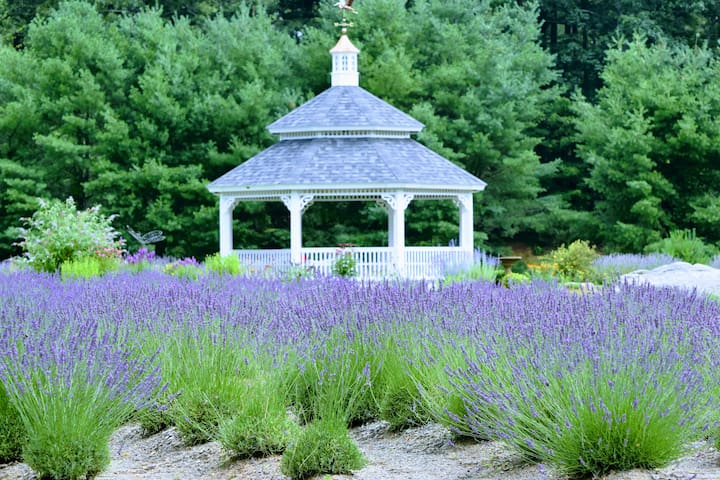 Stay at a Working Lavender Farm
