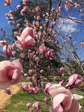 Camellia Court, c1820 - Modern Antebellum - Greensboro - Huis