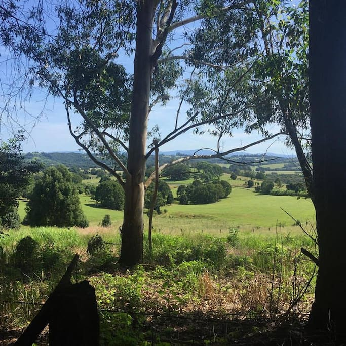 We are tucked away amid the green, rolling hills of the Byron Bay hinterland