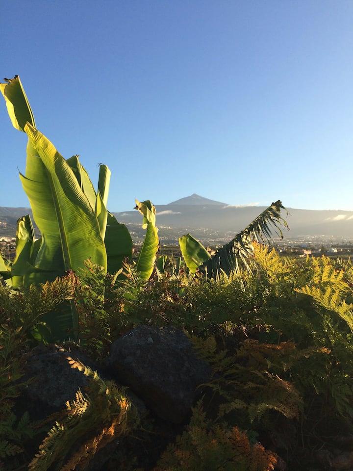 FINCA LA PLANTACIÓN - La Casita