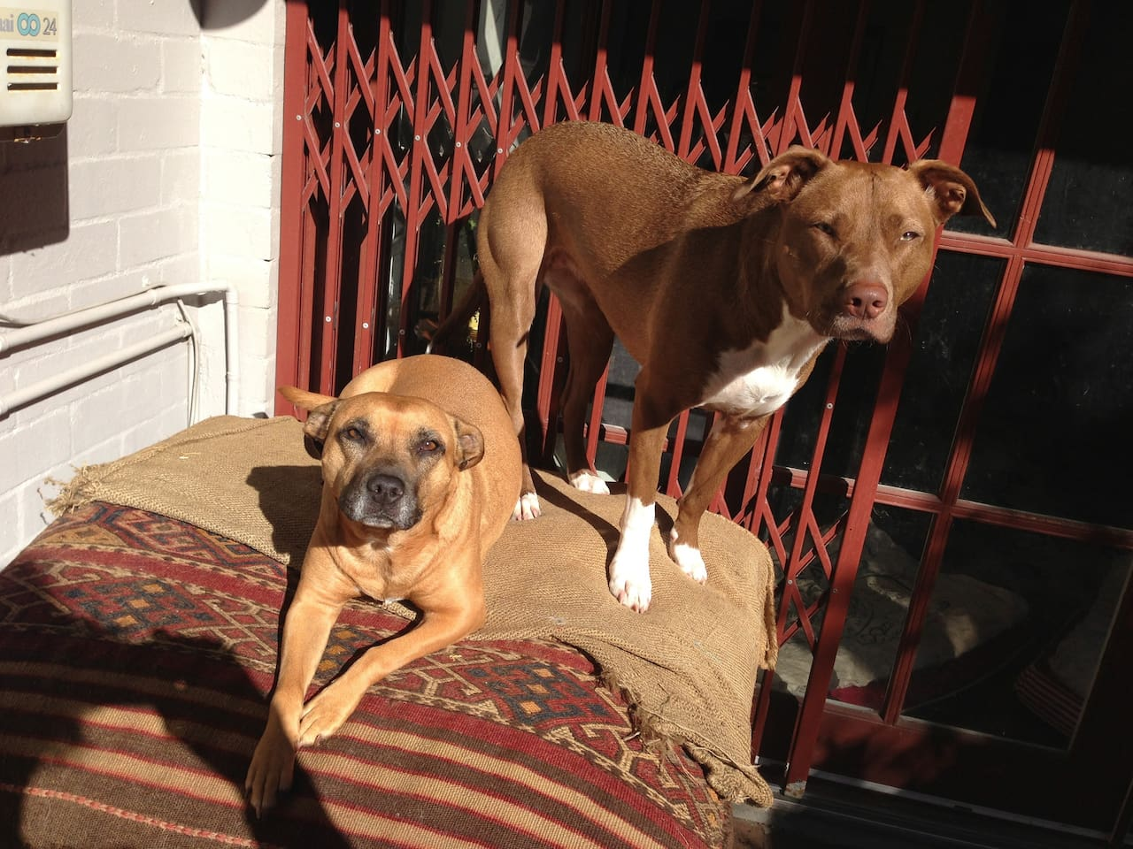 Canine residents outside in courtyard enjoying the sun