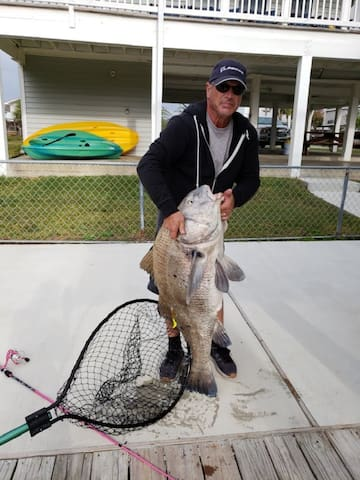 Recent guest, Chris, with a 50' black drum caught from our deck, Dec 22, 2018!