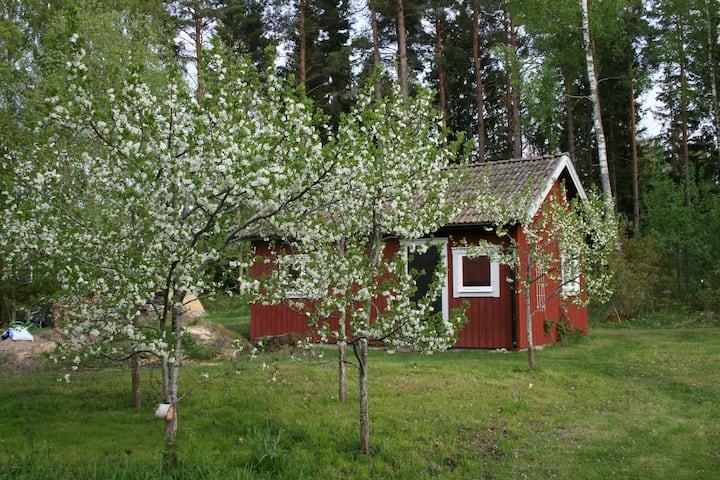 Unsere Ahornfarm in Håkannäs