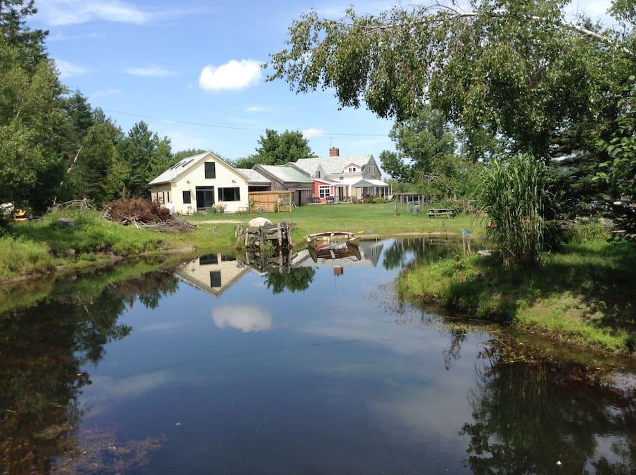 swimming pond in backyard