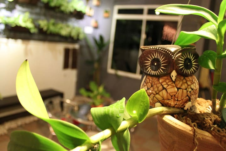 night owl homestay - Nibong Tebal - Other