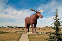 Get a picture with the Moose Jaw, Moose!
