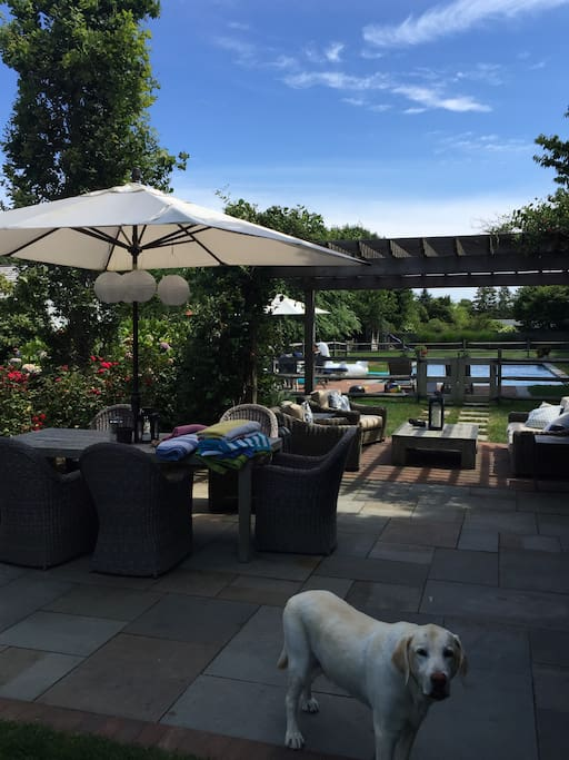 Patio and sitting area.  Dog not included