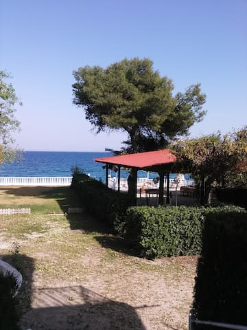 Near the sea,with many pine trees - Gefira Isthmou