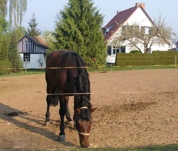 80 m² Ferienhaus mit Garten, Ortsrandlage - Arenshausen - Ev