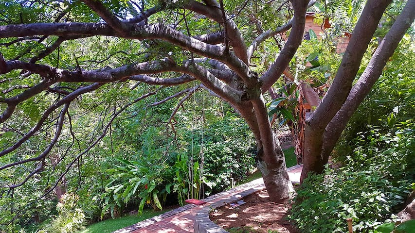 Mature trees provide shade for the patio.