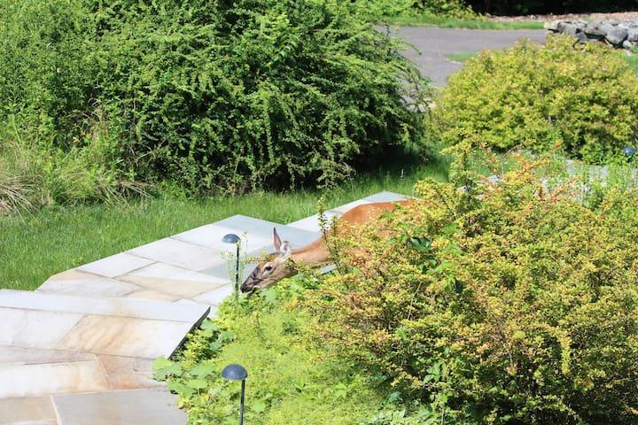 Rural Retreat on Ten Acres - Brookfield - Casa