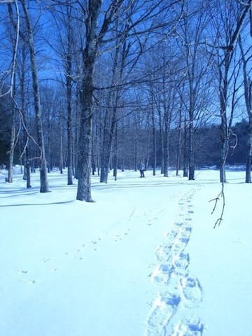 singles in cold brook new york