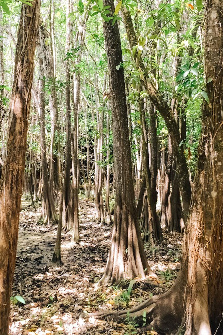 Ecosistema de un cenote