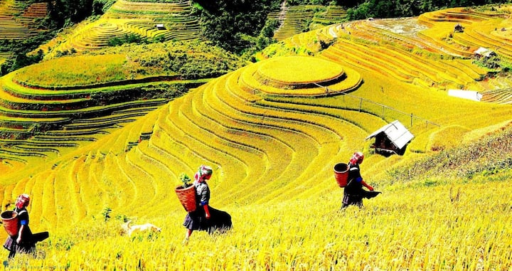 Sapa trip 2 days 1 night by bus from Hanoi