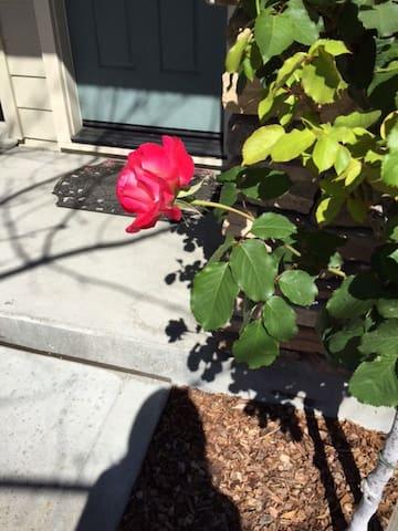 Sunny, bright, veggie garden, fruit trees