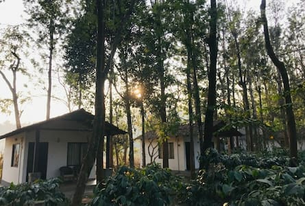 TGC: M1- Cottages Amidst Mudumalai Forest