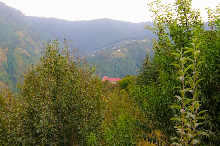 The Apple Orchard Farmstay is surrounded by lush greenery with vistas of the majestic himalayas in the backdrop.